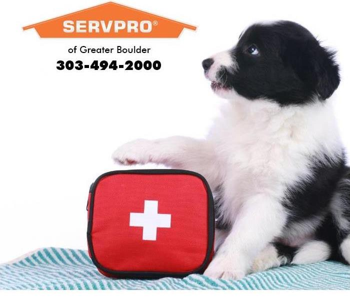 Dog with first aid kit.